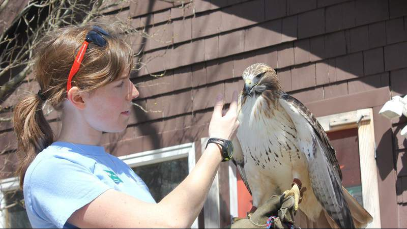 A member of the Leslie Science & Nature Center staff gives a live animal demonstration at Ann Arbor Earth Day Festival on April 22, 2018 (Credit: LSNC)