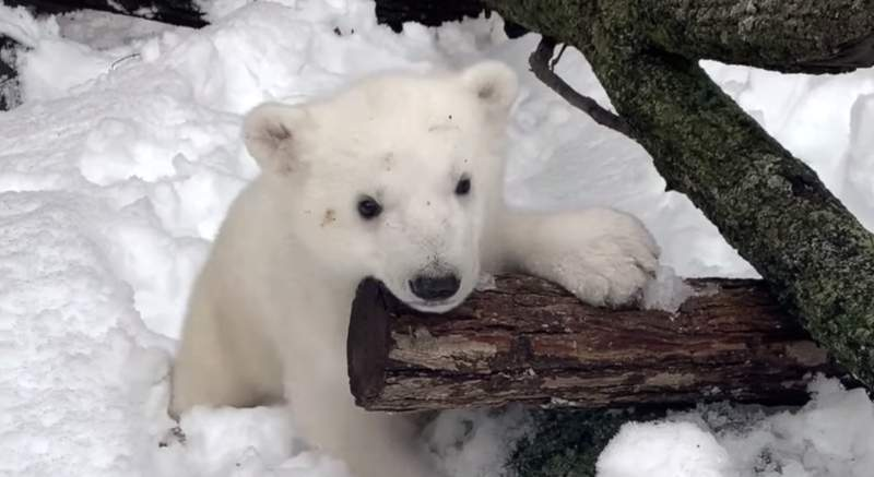 How cute is this baby bear?