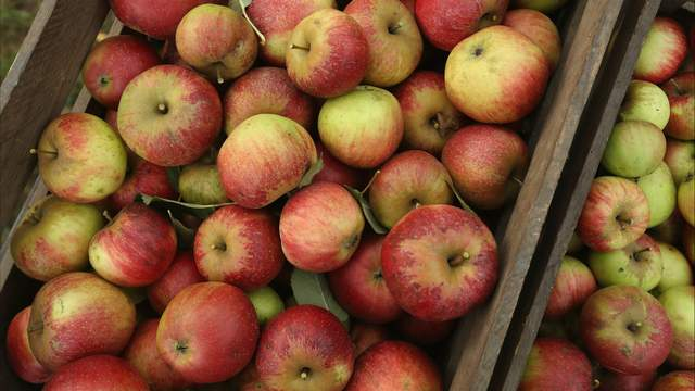 Some apple orchards and cider mills in Michigan have already opened for the season (Sean Gallup/Getty Images)