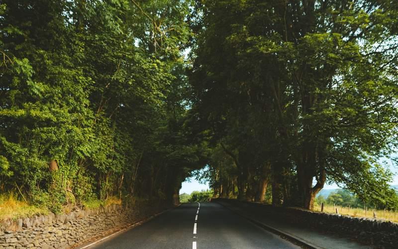 Road trip, anyone?