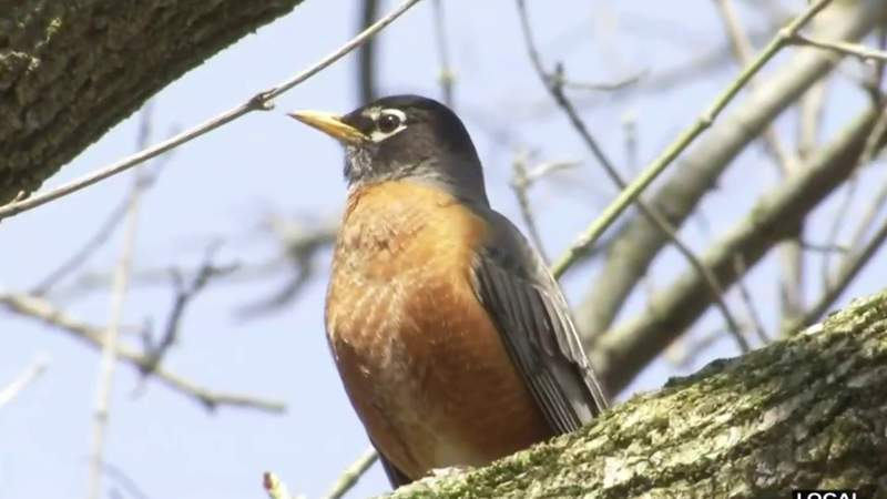 Be a bird watcher in your backyard on Live in the D