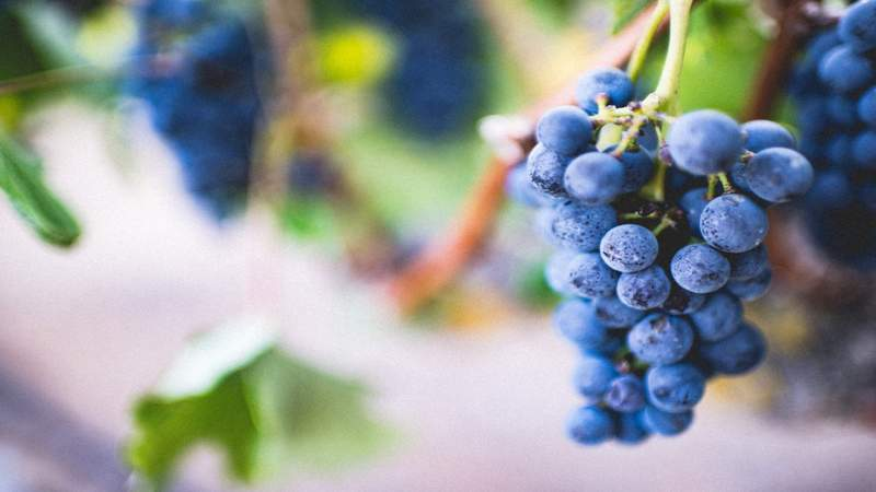 Michigan wineries see boost in business despite pandemic