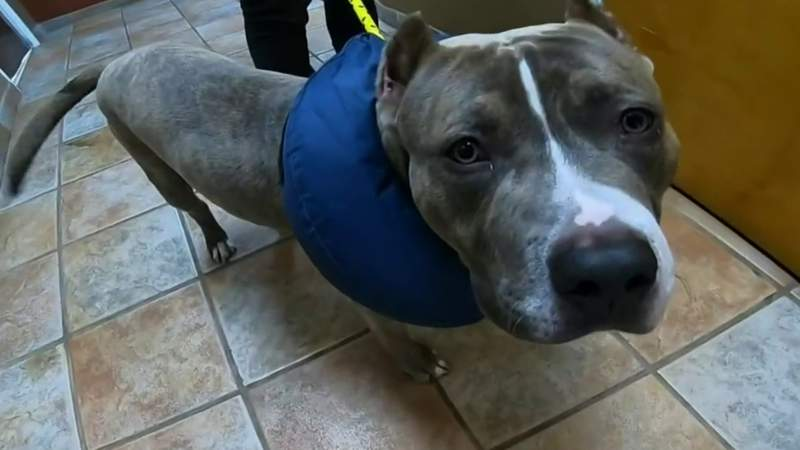 Dog rescued after being shot