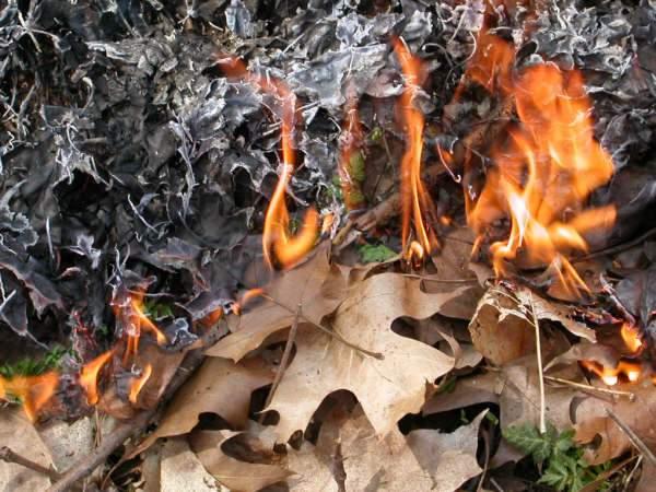 Vegetation is burned during a prescribed burn in Ann Arbor.