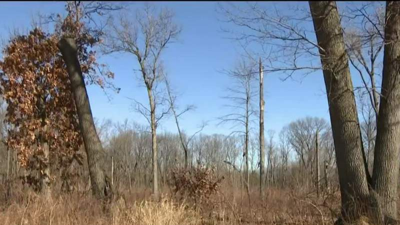 Developer sues Taylor over tree-cutting fine he said is selectively enforced