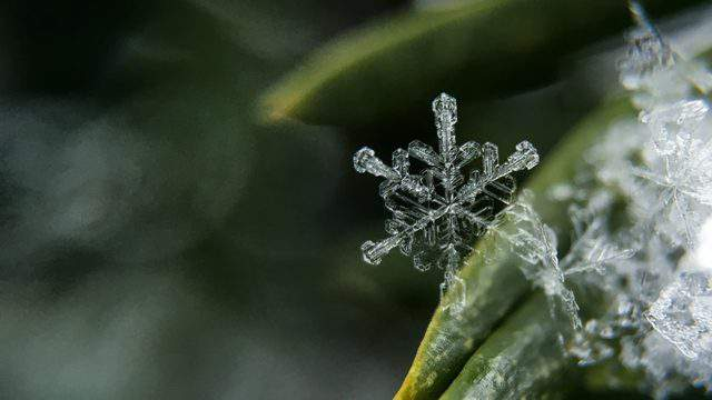 Snow flake on plant (Pixlr)